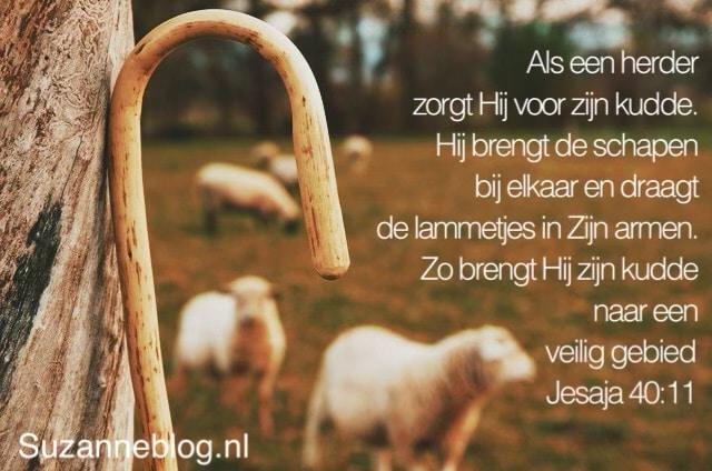 Als een herder zorgt Hij voor zijn kudde. Hij brengt de schapen bij elkaar en draagt de lammetjes in Zijn armen. Zo brengt Hij zijn kudde naar een veilig gebied. Jesaja 40:11